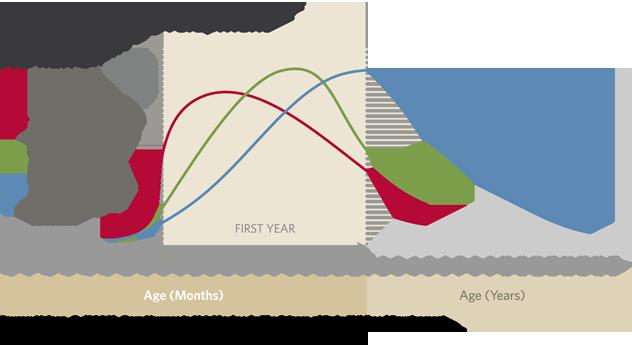 human-brain-development-chart