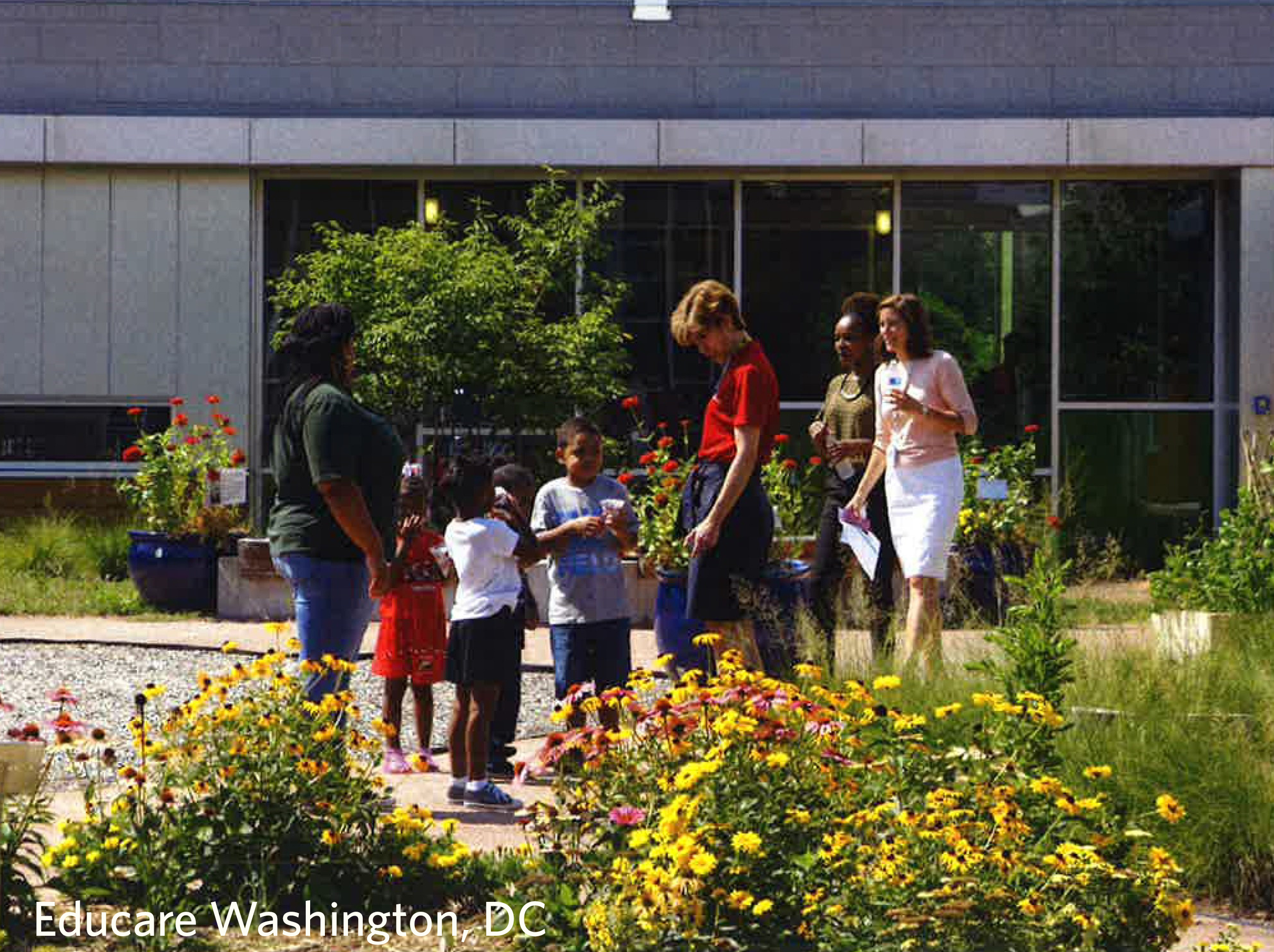 educare gardens plant a seed and watch children grow